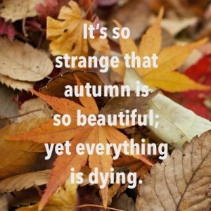 It's so strange that autumn is so beautiful; yet everyhing is dying